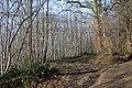 Track through News Wood - geograph.org.uk - 1134144.jpg