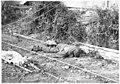 Tranchées du mont San Marco, un mort autrichien - Médiathèque de l'architecture et du patrimoine - AP62T104633.jpg