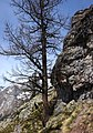 Tree and rock on Mont Chetif.jpg
