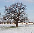Tree in the snow - geograph.org.uk - 1625368.jpg