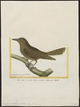 Turdus solitarius - 1700-1880 - Print - Iconographia Zoologica - Special Collections University of Amsterdam - UBA01 IZ16300315.tif