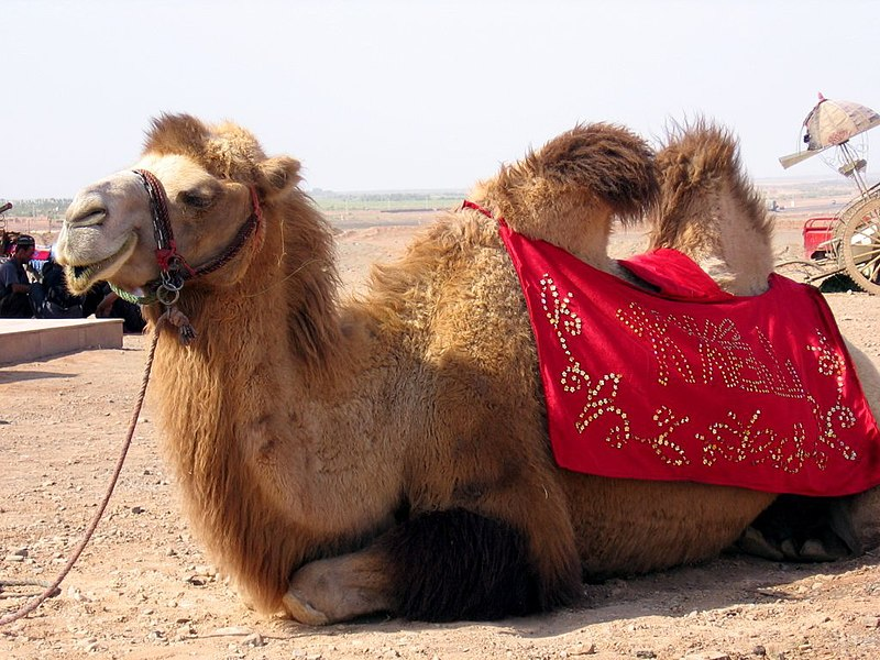 http://upload.wikimedia.org/wikipedia/commons/thumb/7/72/Turpan-flaming-mountains-camellos-d03.jpg/800px-Turpan-flaming-mountains-camellos-d03.jpg