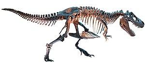 Dinotyrannus