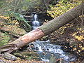 Unnamed waterfall 1 Ricketts Glen State Park.jpg