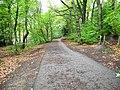 Upper Don Walk in Beeley Wood.jpg
