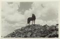 Utgrävningar i Teotihuacan (1932) - SMVK - 0307.i.0039.tif
