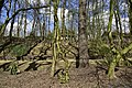 Variétés d'arbres (26394036255).jpg