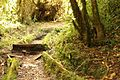 Vegetacion de Bosque Tropical en Costa Rica 003.jpg