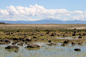 Upper and Lower Table Rock - Vernal pool and mounded prairie on Lower Table Rock plateau. Mount McLoughlin can be seen in the background.