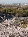 View from Futamurayama Observation Deck (Spring)1, Toyoake 2011.JPG