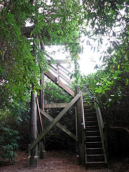 View tower on the Tree Trail - geograph.org.uk - 609521
