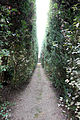 Villa la quiete, giardino, vialetto della ragnaia 03.JPG