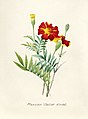 Vintage Flower illustration by Pierre-Joseph Redouté, digitally enhanced by rawpixel 98.jpg
