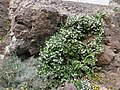 Visit a Castelsardo 06.jpg