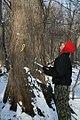 Volunteer counting nests (6788988610).jpg