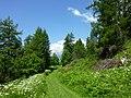 Waldreservat Plontabuora7.jpg