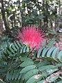 Wayanadu flower.jpg