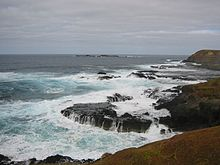 Shearwater Phillip Island