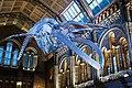 Whale skeleton (39940686951).jpg
