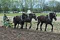Whips and Wheels Prairie Home Carriage Festival Horse Drawn Plowing.jpg