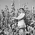 Wijnkoningin Mosella poseert in de wijngaard, Bestanddeelnr 254-4178.jpg