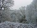 Winterimpressionen-rauhreif-2008-013.jpg
