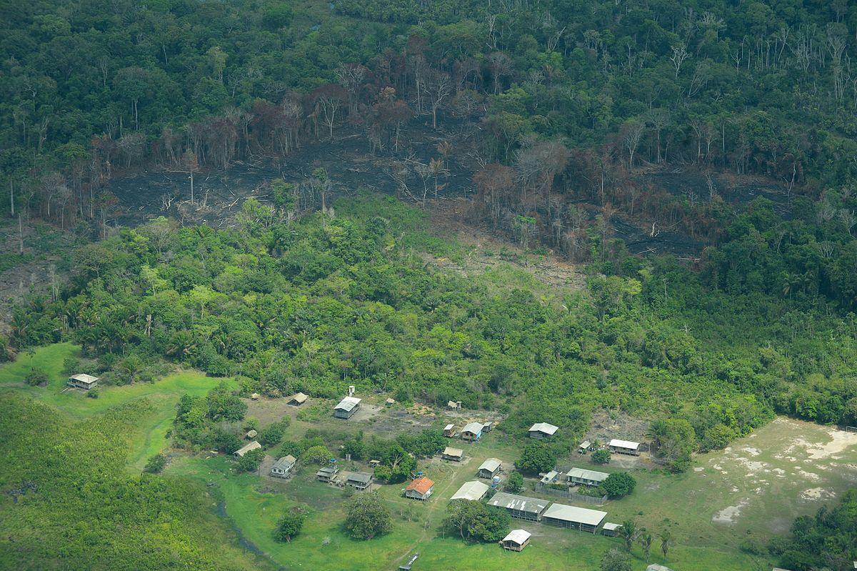 Fotos da amazonia antes do desmatamento 76