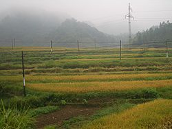 Rice fields in Xian'an District