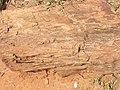 Zambezi Valley, Zambia (2518865936).jpg