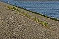 Zeedijk - panoramio (25).jpg