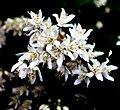 Zirci arborétum virága 4.jpg