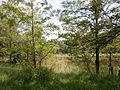 Zolotonis'kyi district, Cherkas'ka oblast, Ukraine - panoramio (178).jpg