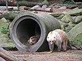 Zoo OS Bären.JPG