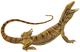 Zoology of Egypt (1898) (Varanus griseus).png