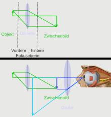 vergrößerung mikroskop