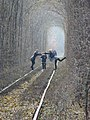 """Тунель кохання"" також є фабрикою по виробництву аватарок, просто фантастика. - panoramio.jpg"
