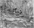 """34th CBs working on purification of their water supply at Solomon Islands."", ca. 08-1945 - NARA - 520640.tif"