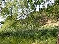 +20180611Müritz-Nationalpark.Feisneck See.-025.jpg
