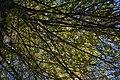 Árboles en el sendero del Río Majaceite 1.jpg