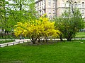 Александровский парк01.jpg