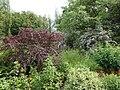 Ботанічний сад ДНУ 40.JPG