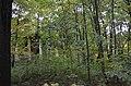 Вид с севера сквозь заросли в парке.JPG