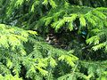 Гнездо в центре Сургута - panoramio.jpg
