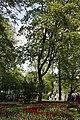 Елагин парк, фестиваль тюльпанов78787.jpg