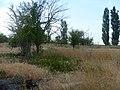 Заброшенный дачный посёлок - panoramio (47).jpg