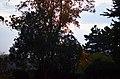 Кам'янець-Подільський ботанічний сад. Фото 1.jpg