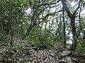 Лес на вершине Маркотхского хребта - panoramio.jpg