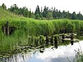 Остатки моста узкоколейки Максатиха - Данилково Abandoned bridge of narrow railway Maksatikha - Danilkovo, Rivitsa river - panoramio.jpg