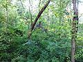 """Парк шума """"Гази Баба"""" 58.jpg"""