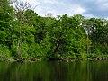 Прибрежные дубравы р. Северский Донец в НПП Гомольшанский лес.jpg